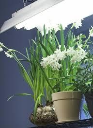 lighting for houseplants. Fluorescent Lighting For Indoor Gardening. General Houseplant Care Houseplants Gardening Know How
