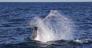 Keepers <b>have a whale of</b> a time | Taronga Conservation Society ...