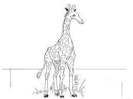 Printable Giraffe Coloring Pages Learning Friends Ms Giraffe