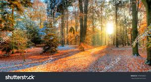 outdoor nature photography. Beautiful Colored Trees In Autumn, Landscape Photography. Snow On Background. Late Autumn And Outdoor Nature Photography N