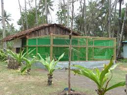 low cost poultry house for rural farmers