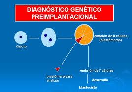 Resultado de imagen de contiene toda la dotación genética