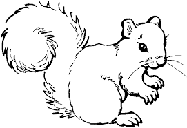 Animal Coloring Free Outline Pictures Of Animals For Colouring Download