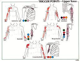 Shoulder Trigger Points Chart Trigger Point Referral Patterns Balance In Motion Bodywork