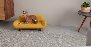 stylish beds and sofas for pets