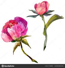 пионы акварелью тату уайлдфлауэр пион цветок в акварель стиль