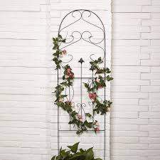 Illustration Of Climbing Plants On Arched Trellis Stock Climbing Plant Trellis