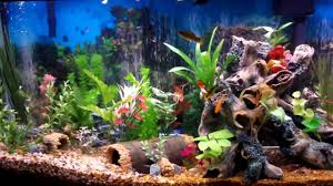 ... Delightful Colorful Fish Tank For Home Interior Decoration : Cool  Picture Of Decorative Colorful Fish Tank