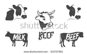 beef cow head silhouette. Modren Silhouette Vector Set Of Cow And Bull Silhouette Illustration Cow Head  Badges Emblems Design Elements Beef Icon Inside Cow Head Silhouette U