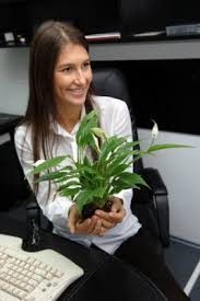 Office feng shui plants House Plants Improve The Feng Shui Of Your Homeoffice The Indoor Air Quality With Plants Youtube Sacred Feng Shui Design Improve The Feng Shui Of Your Homeoffice