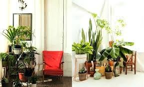 home decor plants living room home decor stores mesa az