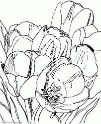 20453 Tulp Kleurplaatgif 10421280 Flower Coloring Tulip