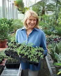 gardening year round martha stewart gardening