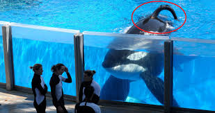 10 Shocking Secrets SeaWorld Doesn\u0027t Want You To Know
