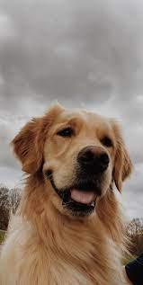 Cute dog wallpaper, Dog wallpaper, Cute ...