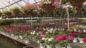 Frank Sharum Landscape Design Sharums Garden Center Tips New Inventory Care For Plants
