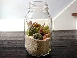Glass Air Plant Containers