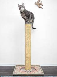 diy cat scratching post dream a