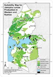 Nyanza Light Metals Suitability Map For Jatropha Curcas Production In Western