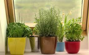 Kitchen Gardening Indoor Kitchen Gardening Dailycombatcom