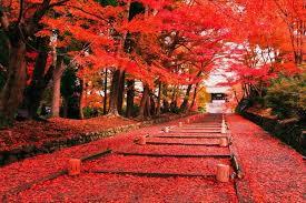 Картинки по запросу красные клены япония