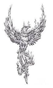 Phoenix Drawing By Matt Sutherland