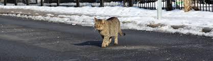 How to TNR   Stop Freezing Water - Neighborhood Cats