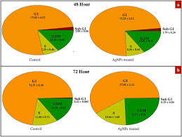 Cell Cycle Pie Chart Pie Chart Depicting Cells Percentage Present Under Different