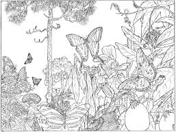 Images Of Rainforest Butterfly Drawings Rock Cafe