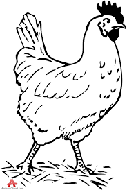 chicken clip art black and white. Beautiful Clip Clipart Black And White Chicken Inside Chicken Clip Art Black And White E