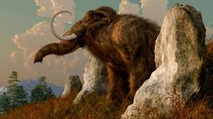 should we bring extinct species back from the dead science aaas an artist s depiction of a woolly mammoth