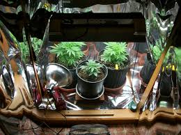 inside of the grow cabinet