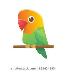cute love bird drawing. Brilliant Bird Cute Cartoon Lovebird Parrot Vector For Love Bird Drawing