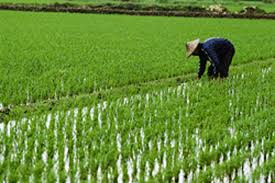Image result for Chinese farmer