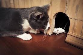 Real life Tom & Jerry : aww