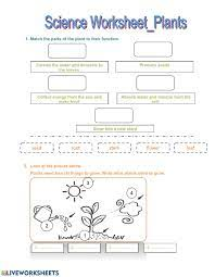 Label the parts of the plant given below. Science Worksheet Thursday Worksheet