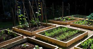organic vegetable garden planning