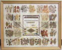 Navajo Dye Chart Gregory Allicar Museum Of Art Dye Chart For Navajo Weaving