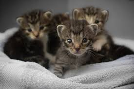 animal shelter kittens. Beautiful Shelter We Are Offering To Spay Your Mother Cat Or Dog At No Cost You And Under  Our Care Will Have All Kittens  On Animal Shelter Kittens N