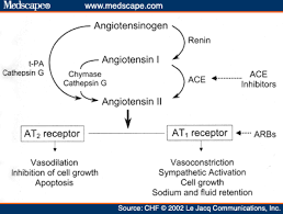 Pathophysiology Of Chf Angiotensin Ii Receptor Blockers In Heart Failure