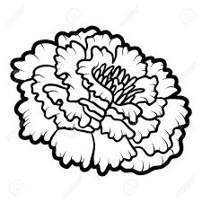 coloring book for children flower marigold stock vector 66627504