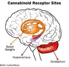 research against medical marijuana