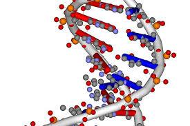 Nucleic Acid Functions Sciencing