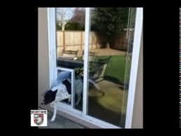 in glass security boss maxseal pet door