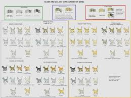 Gold Weight Chart Silver And Gold Smoke Shaded And Tipped Cats Siamese Cat
