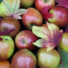 apple food. food \u0026 wine: a brief history of your favorite apples apple