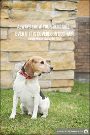 Pet Quotes Extraordinary TORONTO DOG PHOTOGRAPHER INSPIRING DOG QUOTES Pawsh Magazine
