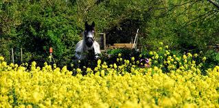 """Résultat de recherche d'images pour """"cheval dans jardin"""""""