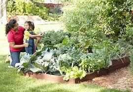 raised edible garden