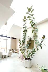 indoor ceramic plant pots indoor large plant pot best large indoor planters ideas on large indoor